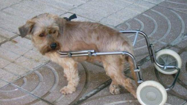 Zarra, uno de los pocos perros abandonados con suerte.