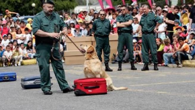 Estos animales tienen, entre otras funciones, la de cuidar a Sus Majestades los Reyes de España.