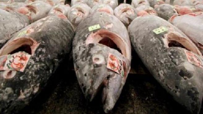 Atunes rojos en un mercado de Tokio (EFE)