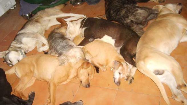 Los perros esperan su muerte lenta en Puerto Real (El Refugio)