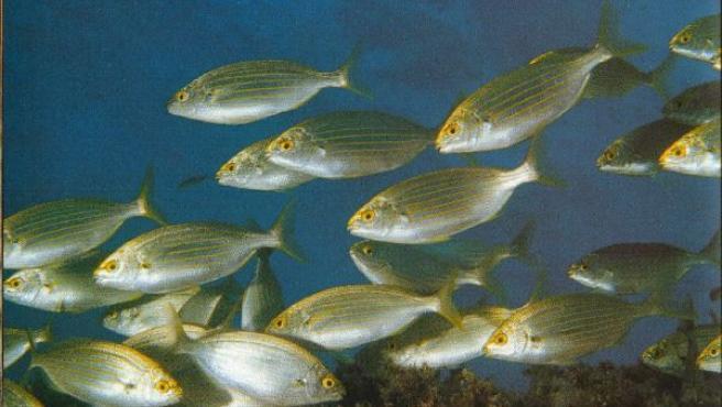 La información y los datos aportados por el submarino servirán para garantizar la calidad de las aguas de baño.