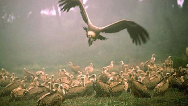 El proyecto comprometería la supervivencia de miles de ejemplares de varias especies salvajes.