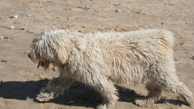 La situación de los canes que deambulan por las ciudades de la Bahía podría cambiar si los municipios crean una perrera pública mancomunada. JOSÉ GARCÍA