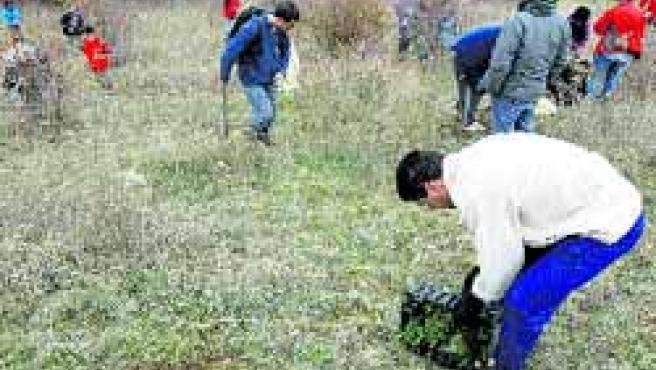 Miembros de la Asociación para la Recuperación del Bosque Autóctono plantaron el sábado varios ejemplares de encinas, quejigos, almendros.(Pablo Elías)
