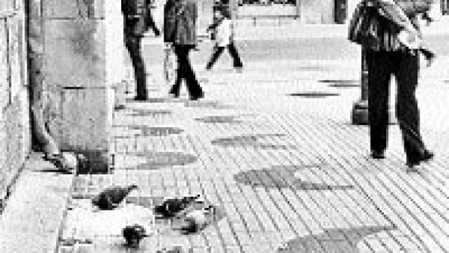 Varias palomas comen junto a la iglesia del Sagrado Corazón.(N.M.S.)