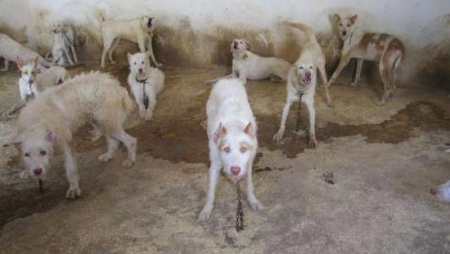 Un grupo de perros abandonados. (EL REFUGIO)