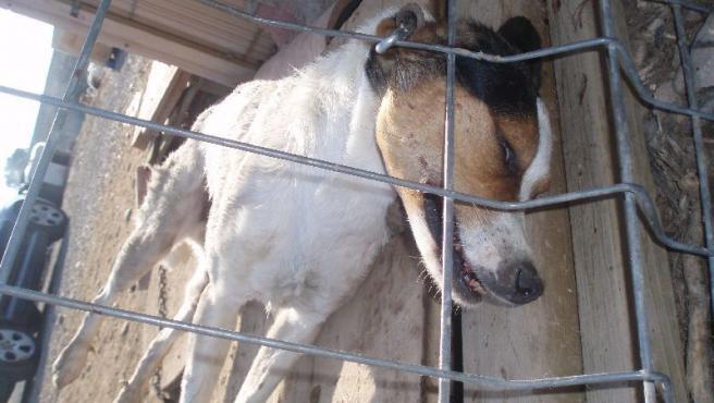 Uno de los perros que mataron el pasado miércoles.