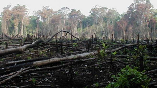 Deforestación en América Latina. (FOTO:ARCHIVO)