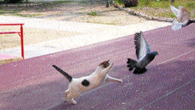 Gatito colabora en la campaña antipalomas.