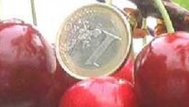 Las cerezas Cherry Glamour miden entre 24 y 32 milímetros. (SAT EDOA)