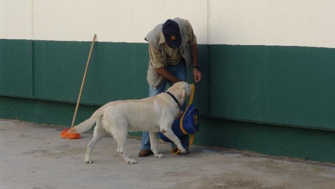 Olaf, durante uno de los ejercicios, con uno de los reclusos encargados de adiestrarlo.