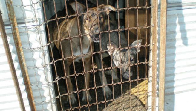 Alguno de los perros rescatados, en las jaulas donde habitaban (FOTO: ANAA)