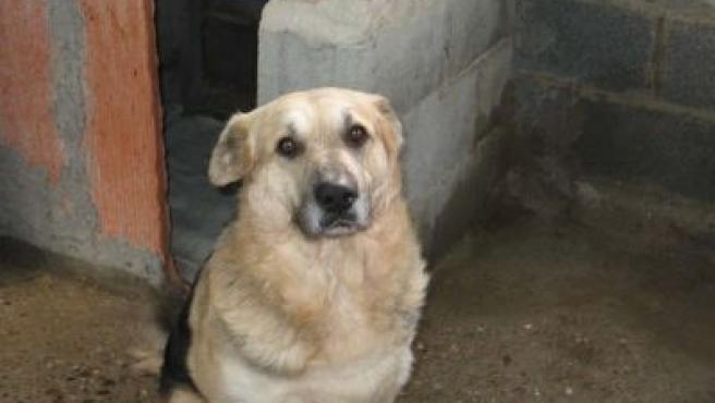Se llama Kiro, tiene ocho años y es un cruce de pastor alemán. Se perdió el lunes en el aeropuerto de Málaga.