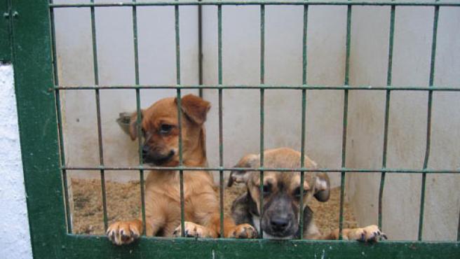Dos de los cachorros de Hellín que fueron salvados.