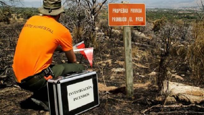 Las intervenciones de la autoridad ambiental se relacionaron con caza ilegal, incendios forestales, vertidos contaminantes, entre otros.