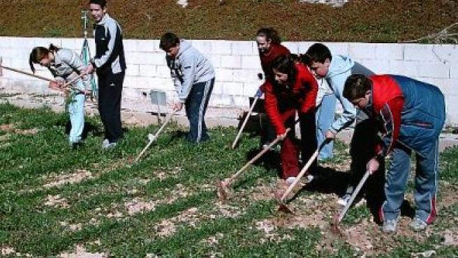 Varios alumnos trabajan la tierra en el huerto escolar.