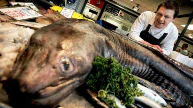 Detalle de la enorme anguila. (DAILY MAIL)