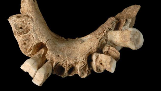 El homínido más antiguo de Europa data de 1,2 millones de años. En la foto, una mandíbula.(FOTO:EFE)