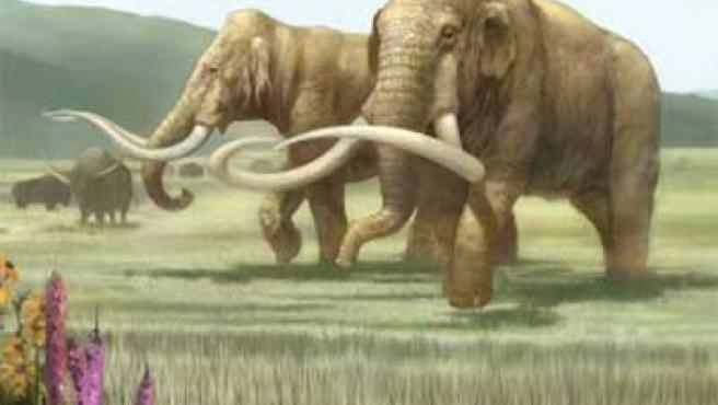 Servirán para predecir futuras extinciones de animales debido al factor del cambio climático.