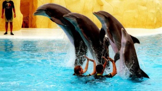 En la imagen, algunos de los delfínes con los que cuenta el parque zoológico Loro Parque. (CRISTOBAL GARCIA/EFE)