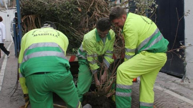 Los trabajadores de Jardines S.L. pasarán a englosar la plantilla de la OAL Servicios Operativos.