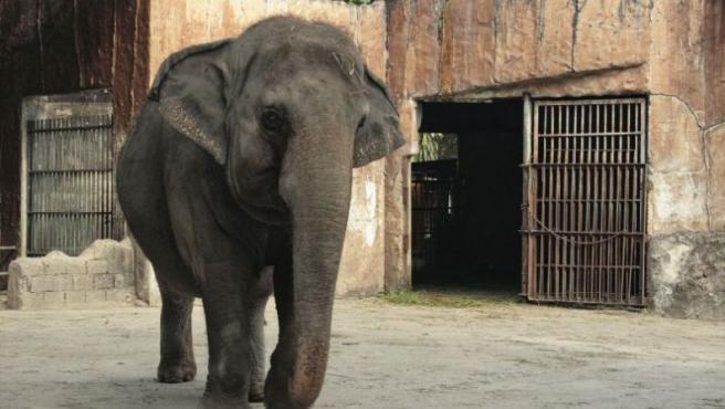 La elefanta Mail, en su recinto del zoo de Manila. (EFE)