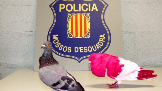 Las palomas robadas iban a ser vendidas en el mercado negro (EFE).