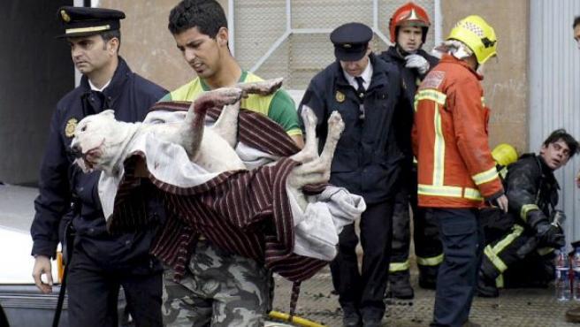 Un vecino rescata a su perro en el incendio de un piso que provocó el desalojo de un centenar de vecinos. (EFE)