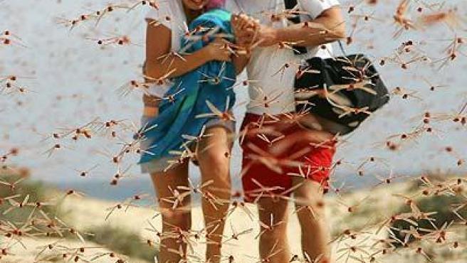Una pareja de turistas huye de una plaga de langostas en una playa de Fuerteventura (REUTERS).