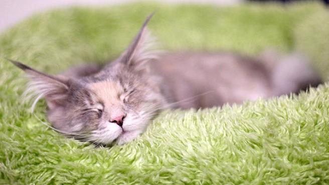 El Refugio encontró familia para 733 animales, entre perros y gatos. (Foto: Archivo).