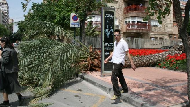 La palmera corta la acera en la avenida Gutiérrez Mellado
