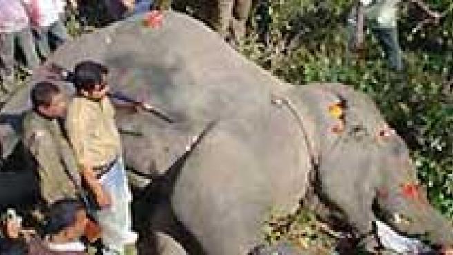 Elefante Bin Laden. (BBC)
