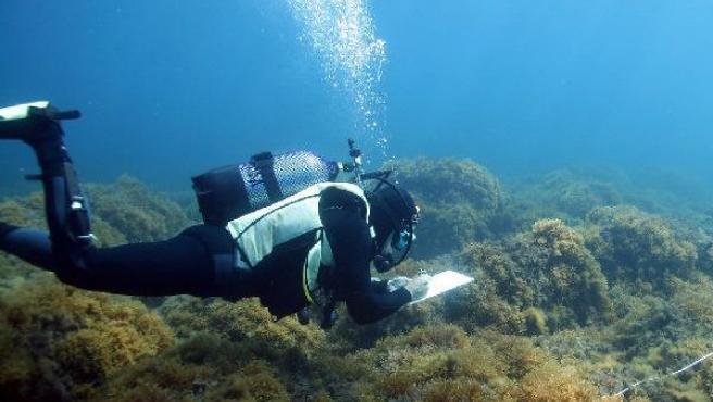 Un buzo estudia la flora en un fondo marino.