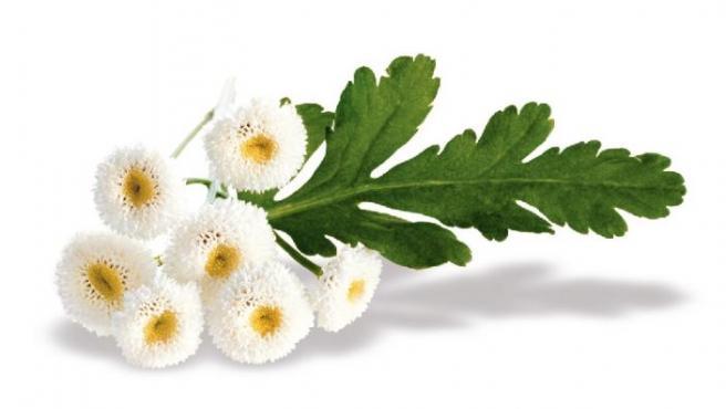 Cada planta tiene unas propiedades curativas.
