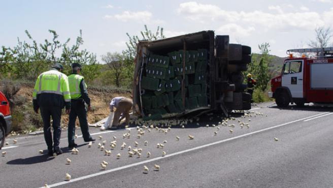 Pollitos sobre el asfalto tras un accidente (ARCHIVO).