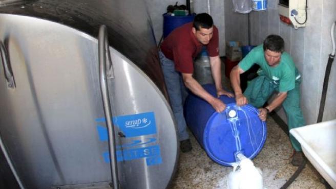 Dos ganaderos tiran leche que no pueden almacenar en Frades (A Coruña)