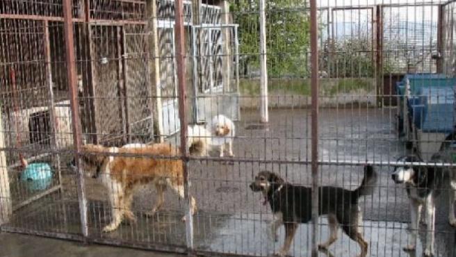 La inversión estará destinada a la recogida de perros en municipios menores de 5.000 habitantes.
