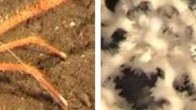 Imágenes del ecosistema descubierto en Avilés.