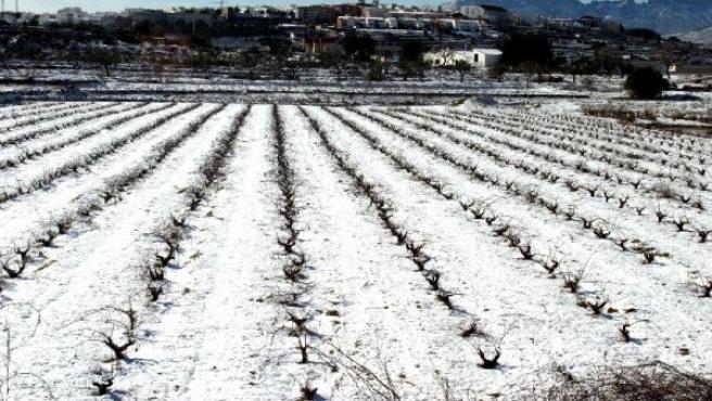 Viñedos arrasados por granizo en Valencia(ARCHIVO)