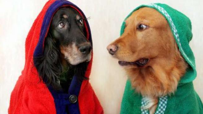 Dos perros muy divertidos.