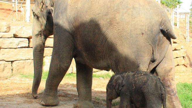 La cría nació el 19 de julio y desde entonces no se separa de su madre.