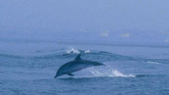 Fotografía tomada durante un avistamiento de cetáceos. (ARCHIVO)