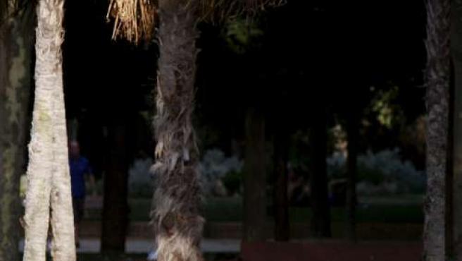 Un hombre toma el sol en un parque madrileño.