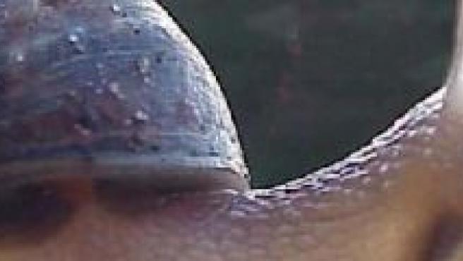 Un caracol, en una foto de archivo.