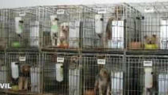 Cachorros enjaulados en el criadero.