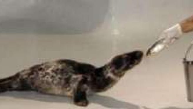 La foca Humphrey junto a sus cuidadores.