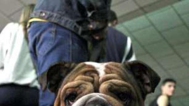 El año pasado se adoptaron más de 5.000 perros.