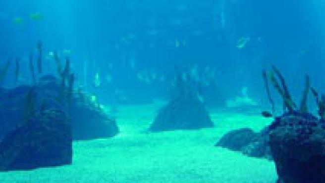 Peces y crustáceos son los más expuestos a las 'zonas muertas'.