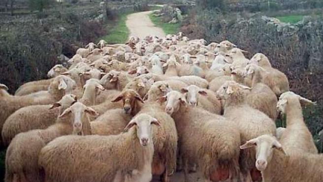 Un rebaño de ovejas. ARCHIVO/20MINUTOS