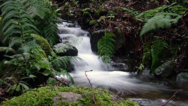 Parque Nacional de Garajonay en isla de La Gomera.